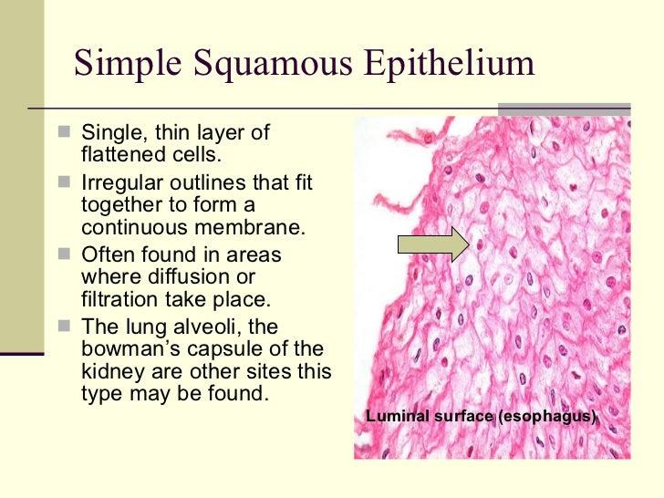Identifying Epithelium
