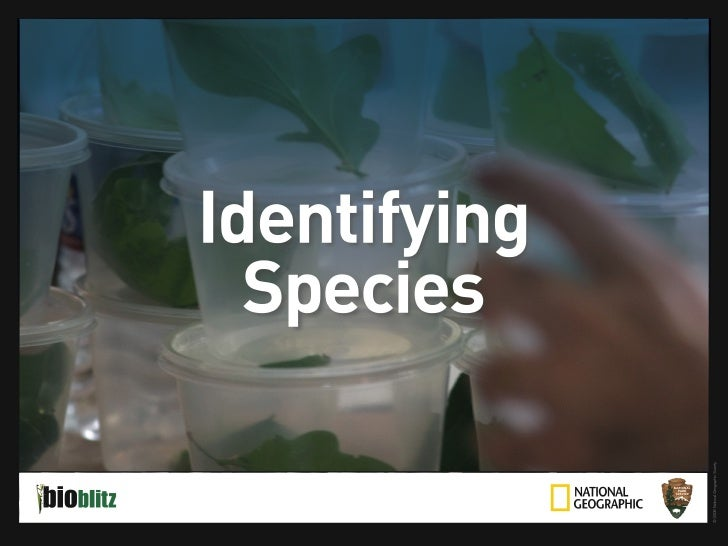 BioBlitz Educator Resource: Identifying Species