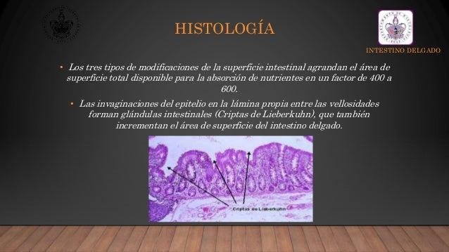 Histología de Intestino Delgado