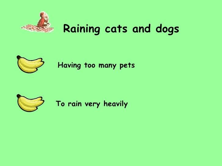 Hot Dog Idiom Definition