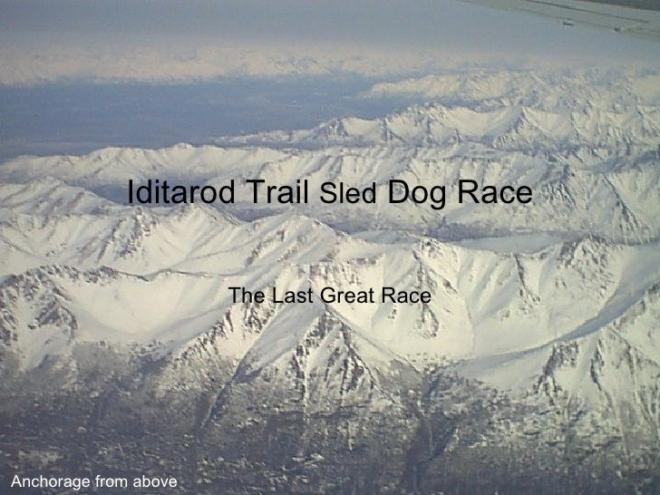 Iditarod Trail  Sled  Dog Race The Last Great Race Anchorage from above