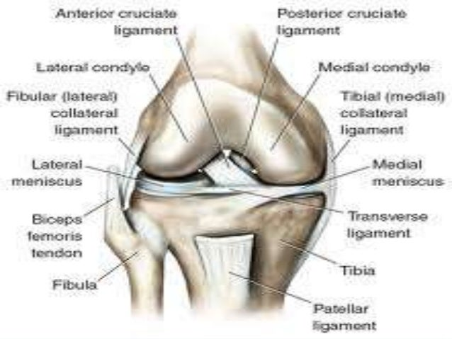 knee-joint-13-638?cb=1381678752, Human Body