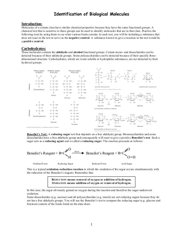 biological molecule lab report View test prep - lab 3- qualitative analysis of biological molecules from bsc 1010c at stetson introduction macromolecules are large molecules formed from.