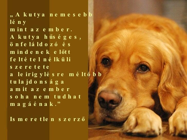 kutya ember barátság idézetek Idézetek Kutyákról