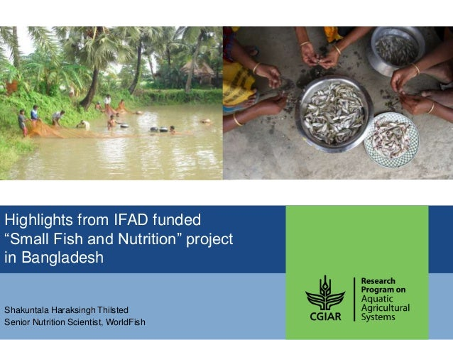 "Highlights from IFAD funded ""Small Fish and Nutrition"" project in Bangladesh Shakuntala Haraksingh Thilsted Senior Nutriti..."