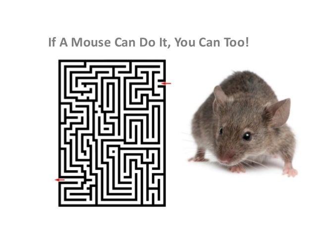 If A Mouse Can Do It, You Can Too!