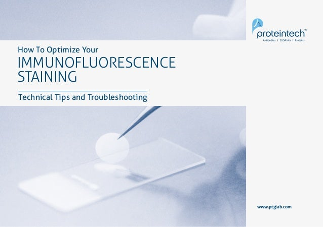 1Immunofluorescence Staining www.ptglab.com IMMUNOFLUORESCENCE STAINING How To Optimize Your Technical Tips and Troublesho...
