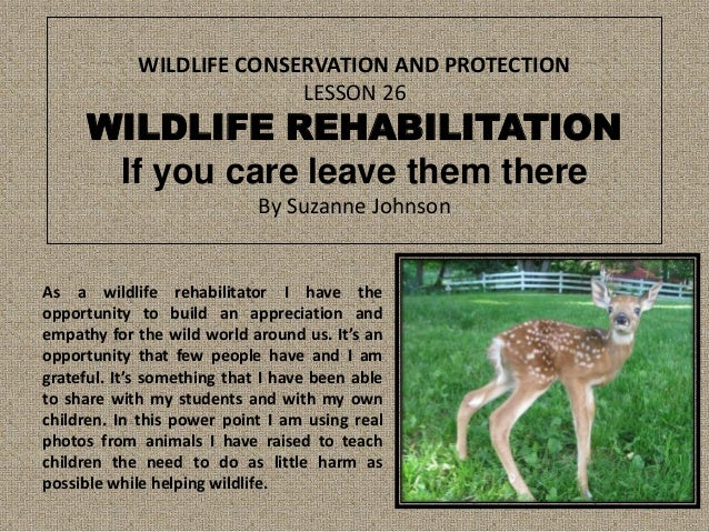 WILDLIFE CONSERVATION AND PROTECTION LESSON 26  WILDLIFE REHABILITATION If you care leave them there By Suzanne Johnson  A...