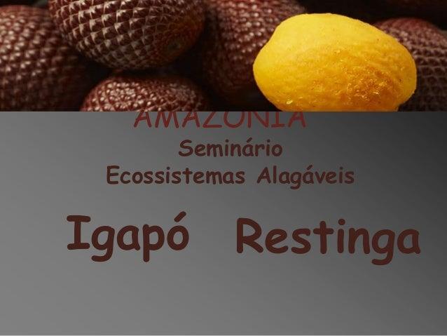 ESTUDOS INTEGRATIVOS DA AMAZÔNIA Seminário Ecossistemas Alagáveis  Igapó Restinga