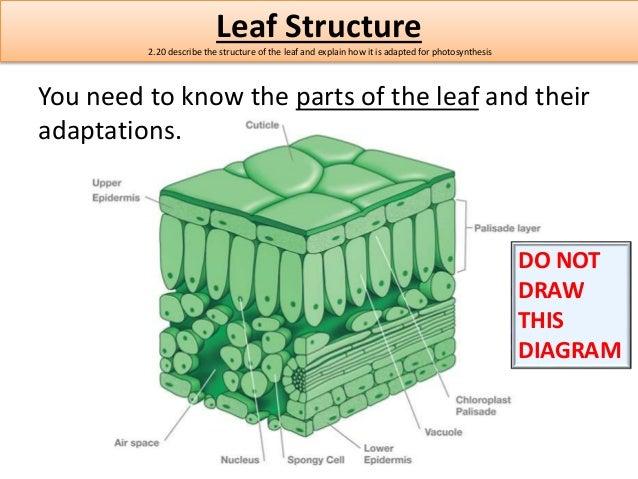 edexcel igcse biology textbook pdf