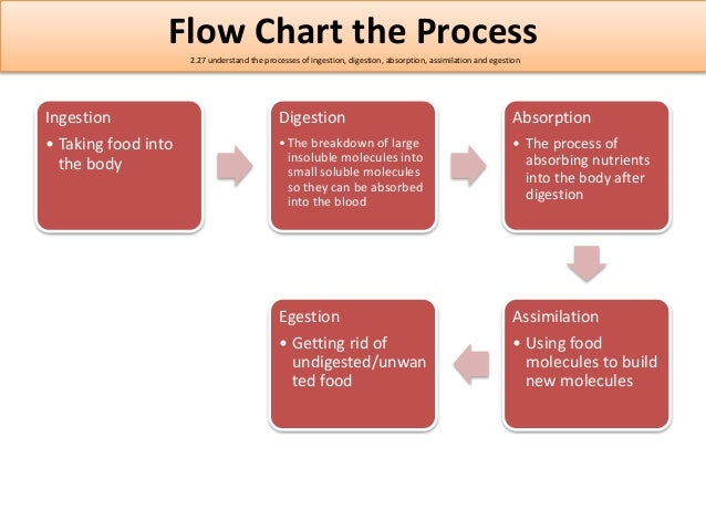 Igcse biology edexcel 217 232 flow chart ccuart Image collections