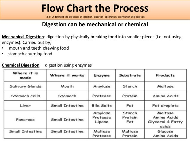 physioex chemical and physical process of digestion Physioex chemical and physical processes of digestion review sheet physioex chemical and physical processes of digestion review sheet - title ebooks : chemical process safety fundamentals with applications solution manual.