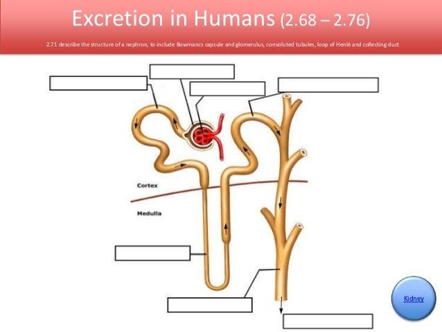 Igcse biology edexcel 268 276 11 ccuart Choice Image