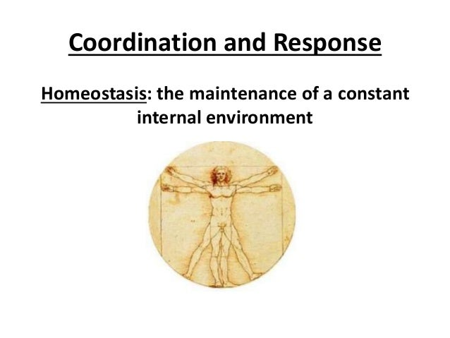 Coordination and Response  Homeostasis: the maintenance of a constant  internal environment