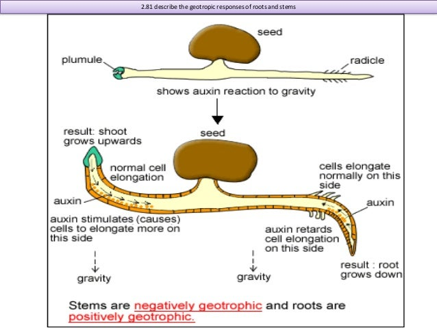 edexcel as biology coursework help