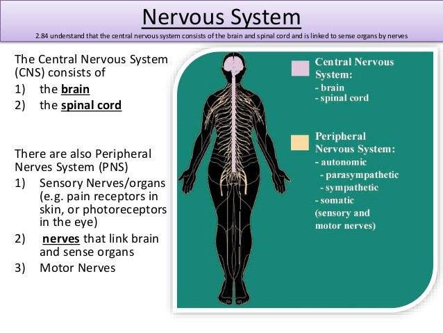 understanding the autonomic nervous system