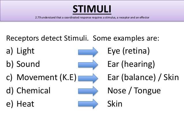 Stimulus Anatomy Definition 1169640 Follow4morefo