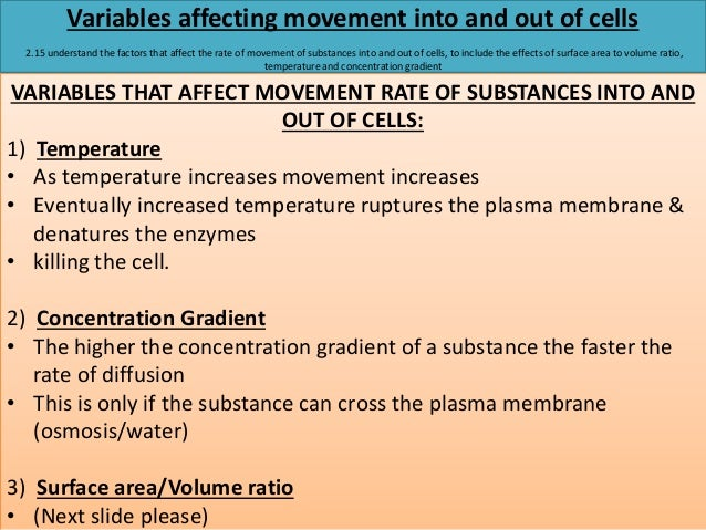 How does surface area to volume ratio affect the rate of diffusion?