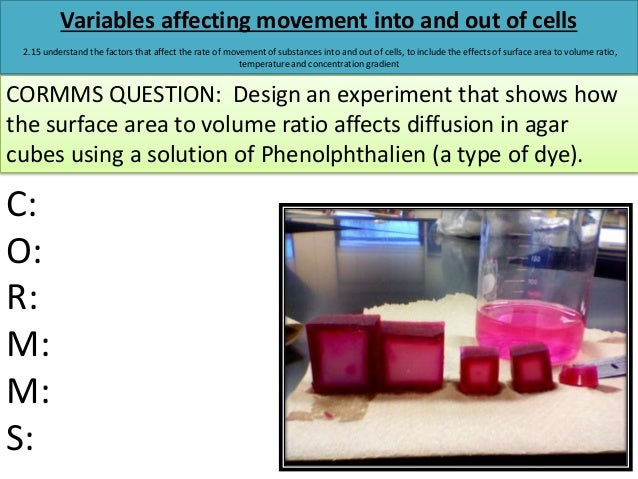 describe two variables that affect the rate of diffusion Get an answer for 'what factors affect the movement of molecules across a semipermeable membrane' and find homework help for other science questions at enotes.