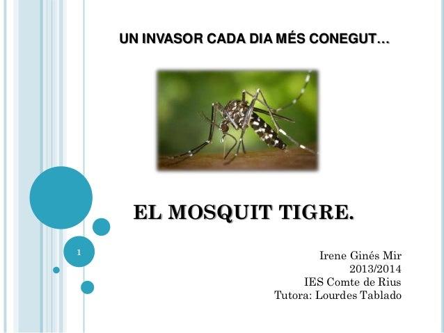 UN INVASOR CADA DIA MÉS CONEGUT…  EL MOSQUIT TIGRE. 1  Irene Ginés Mir 2013/2014 IES Comte de Rius Tutora: Lourdes Tablado