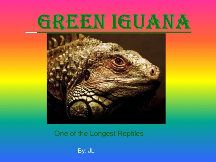 Green Iguana<br />One of the Longest Reptiles<br />By: JL<br />