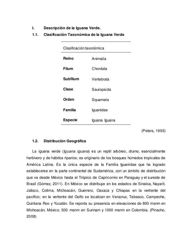 I. Descripción de la Iguana Verde. 1.1. Clasificación Taxonómica de la Iguana Verde Clasificación taxonómica Reino Animali...