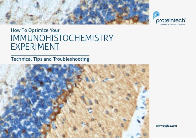 1Immunohistochemistry www.ptglab.com IMMUNOHISTOCHEMISTRY EXPERIMENT How To Optimize Your Technical Tips and Troubleshooti...