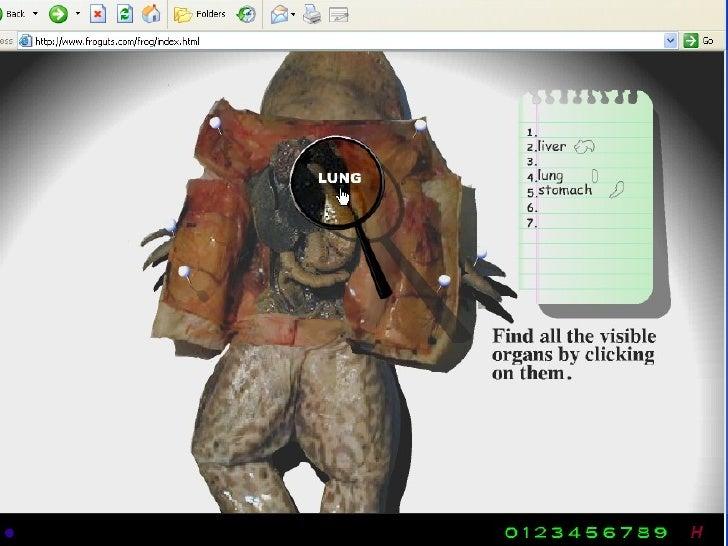 <ul><li>From: http://dissect.froguts.com / </li></ul>