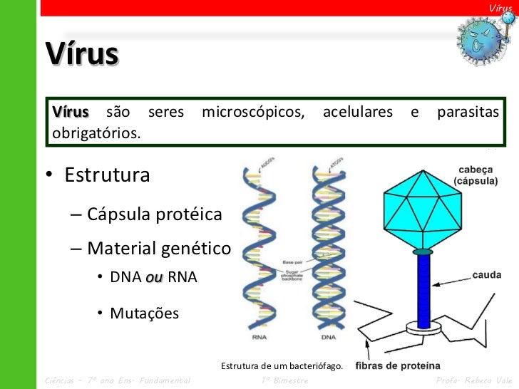 VírusVírus Vírus são seres                     microscópicos,            acelulares   e   parasitas obrigatórios.• Estrutu...