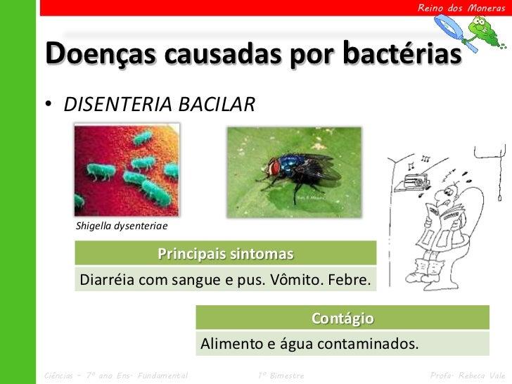 Reino dos MonerasDoenças causadas por bactérias• DISENTERIA BACILAR       Shigella dysenteriae                   Principai...