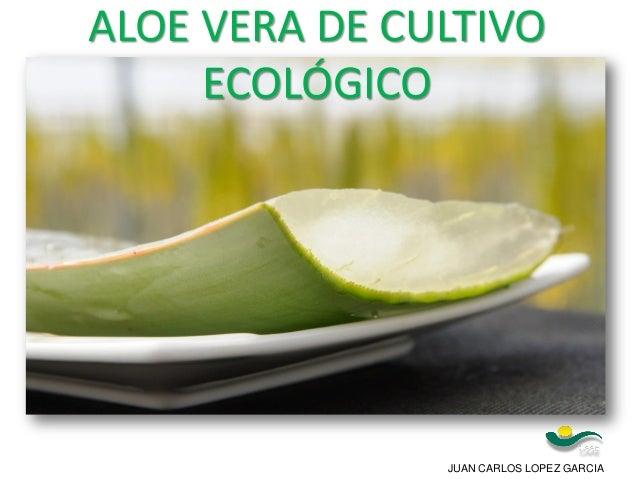 JUAN CARLOS LOPEZ GARCIA ALOE VERA DE CULTIVO ECOLÓGICO