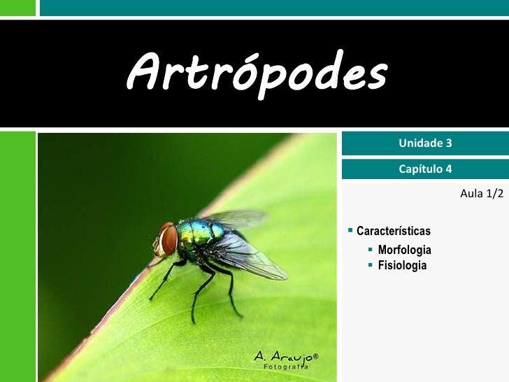 Artrópodes                  Unidade 3                  Capítulo 4                               Aula 1/2         Caracter...