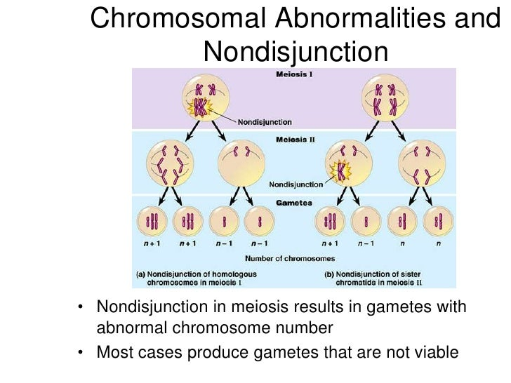 genetics and down syndrome In every cell in the human body there is a nucleus, where genetic material is  stored in genes genes carry the codes responsible for all of our inherited traits  and.