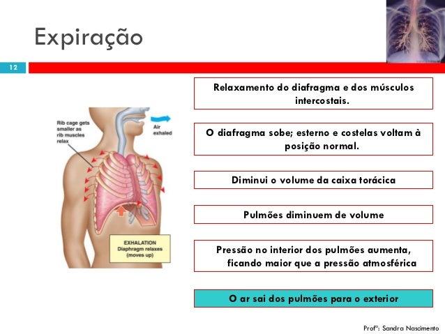 iii sistema respirat rio