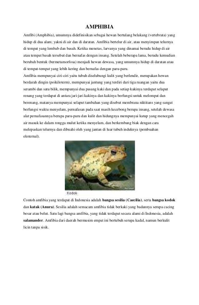 81+ Gambar Dan Penjelasan Hewan Amfibi HD Terbaru