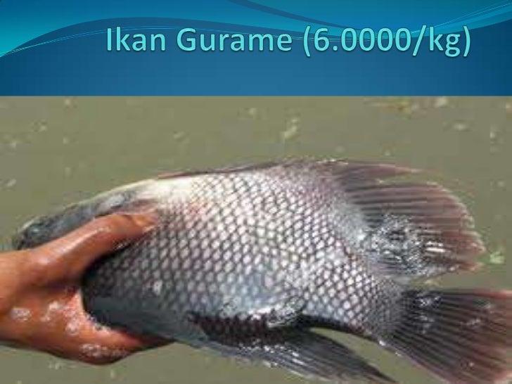 IkanGurame (6.0000/kg)<br />