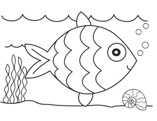 Ikan new