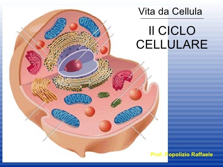 Il CICLO CELLULARE Vita da Cellula Prof. Popolizio Raffaele