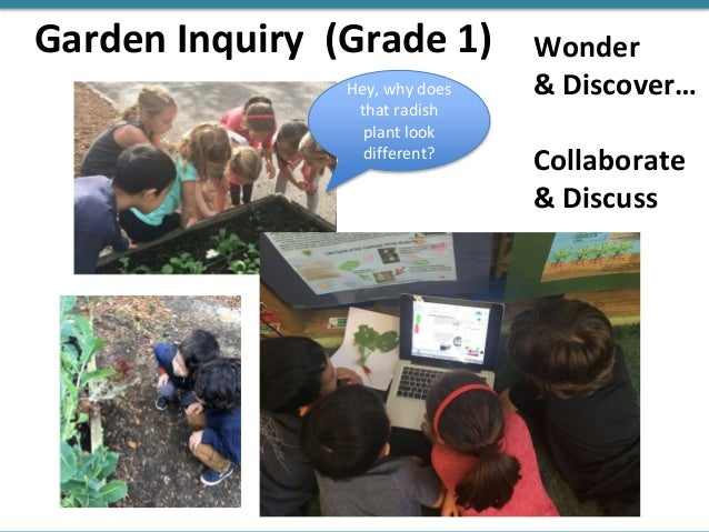 Garden Inquiry (Grade 1) Hey, why does that radish plant look different? Wonder & Discover… Collaborate & Discuss