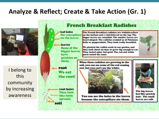 Analyze & Reflect; Create & Take Action (Gr. 1) I belong to this community by increasing awareness
