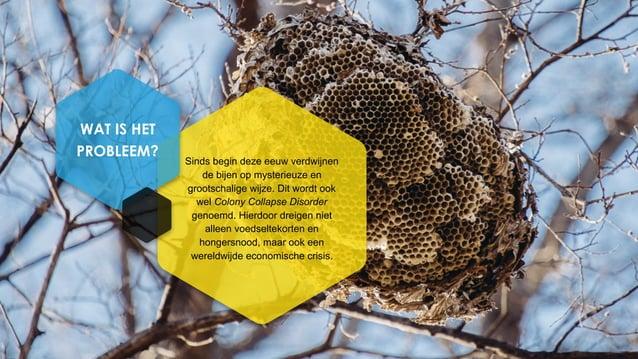 Sinds begin deze eeuw verdwijnen de bijen op mysterieuze en grootschalige wijze. Dit wordt ook wel Colony Collapse Disorde...