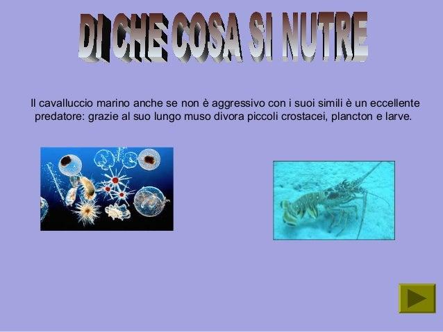 Il cavalluccio marino umberto for Divora larve di zanzara