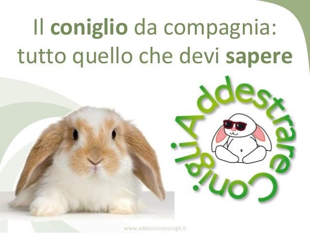 Il coniglio da compagnia:tutto quello che devi sapere          www.addestrareconigli.it