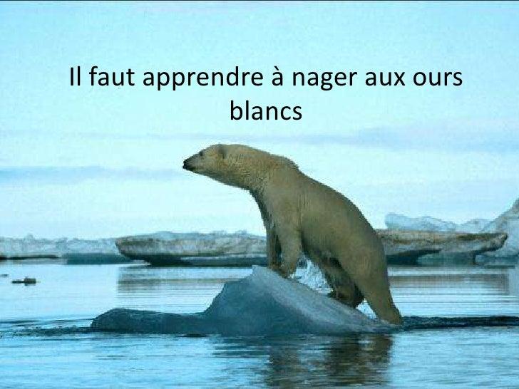 Devons nous doter les ours blancs de combinaisons intégrales avec palmes et masques?<br />