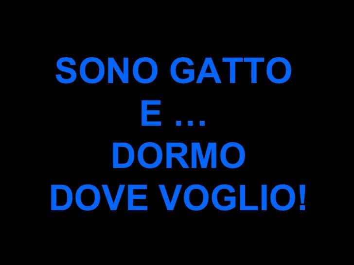 SONO GATTO  E …  DORMO DOVE VOGLIO!