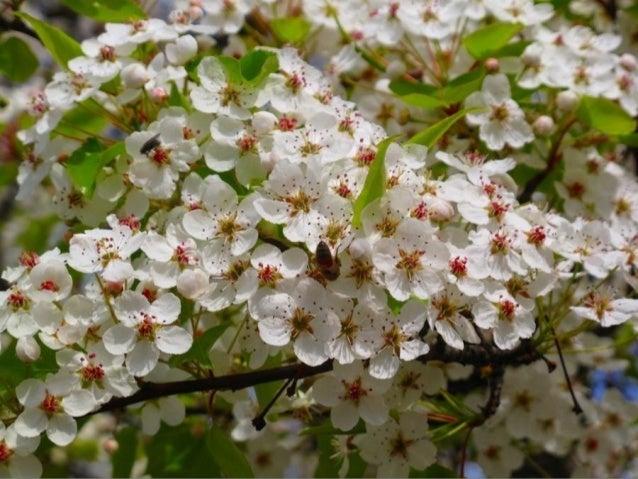 İlkbahar gelince