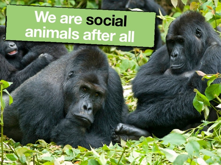 We are social animals after all