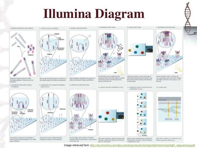 Illumina Sequencing
