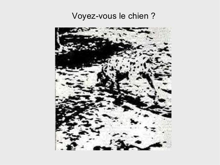 Voyez-vous le chien ?