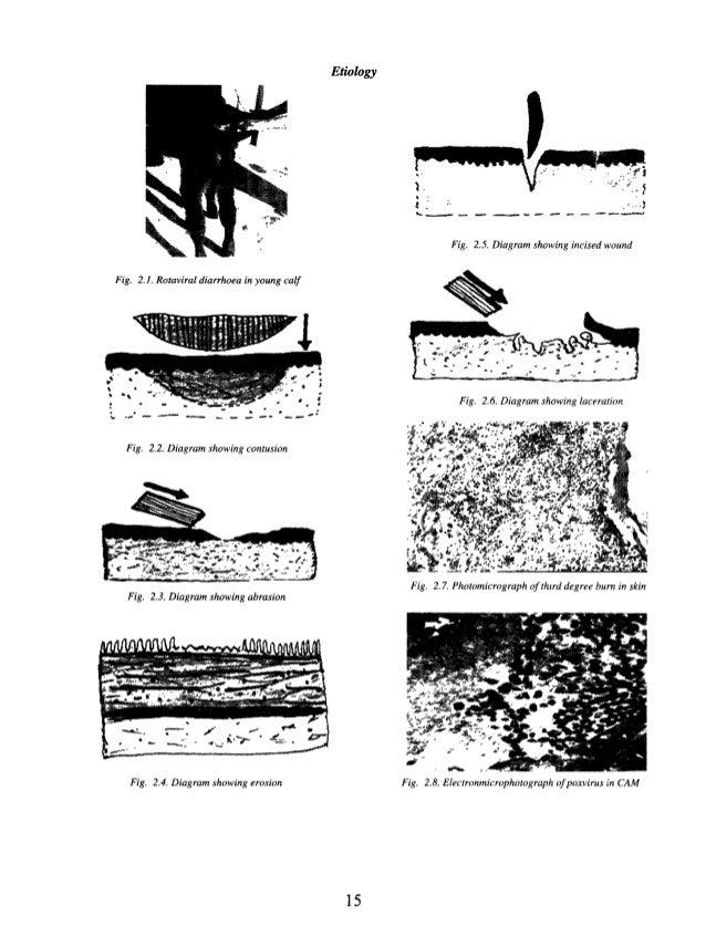 illustrated veterinary pathology  general  u0026 systemic pathology